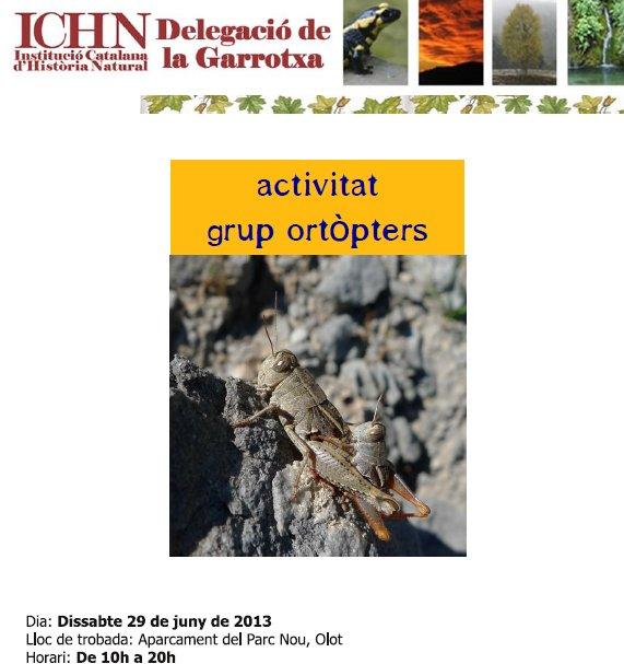 activitat ortòpters 29 juny