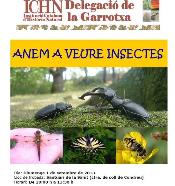 anem a veure insectes2