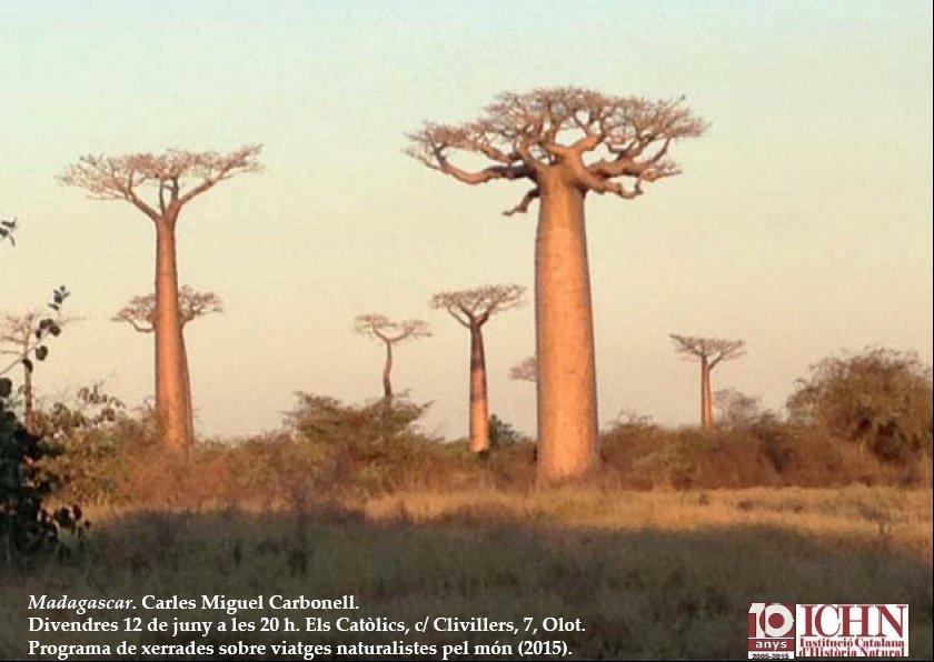 VIATGES NATURALISTES MADAGASCAR