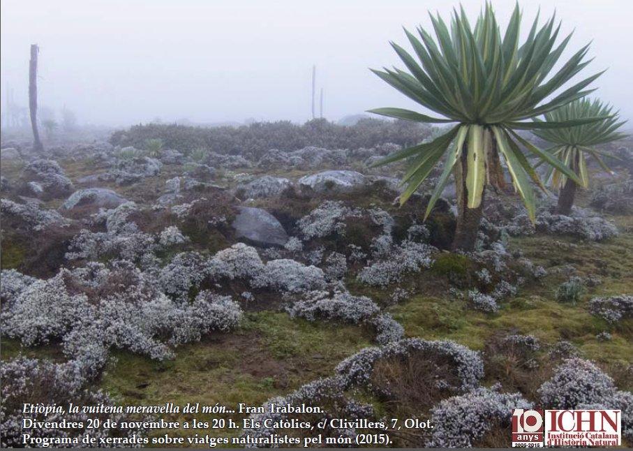 Cartell viatges naturalistes Etiopia